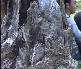 Türk türbanlı, açık karışık ormanda gizli çekim pornoları